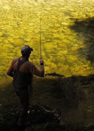 Man, seen from behind, fly-fishing. Photo: Peter Christensen