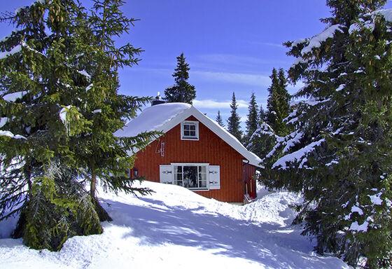 En rød liten hytte i skogen