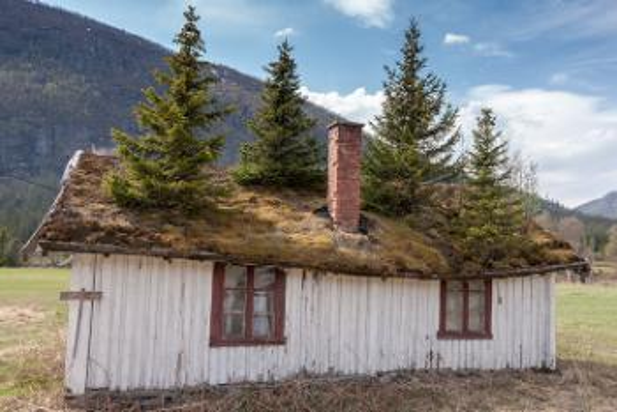 Hus med grantrær på taket