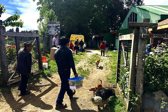Mennesker og hunder på rural vei