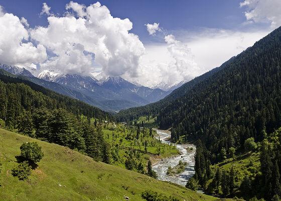 Kashmir, dal, frodig