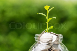 grønn vekst